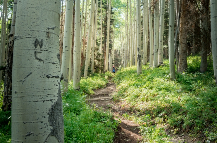 Horsethief Trail. Ouray, CO